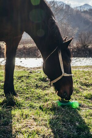 Brown horse eating grass near plastic bottle, example of pollution in our days