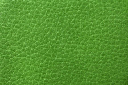 View of the skin texture in green.