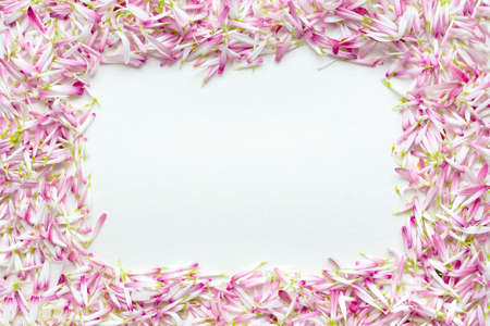 Frame of a large number of petals of daisies