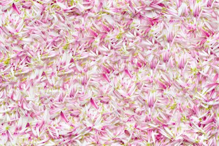 Background from a large number of petals daisies