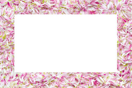Isolate frames from a large number of petals daisies 写真素材