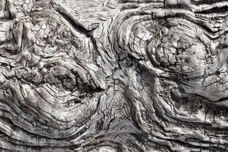 The process of healing and aging saw cut tree 写真素材