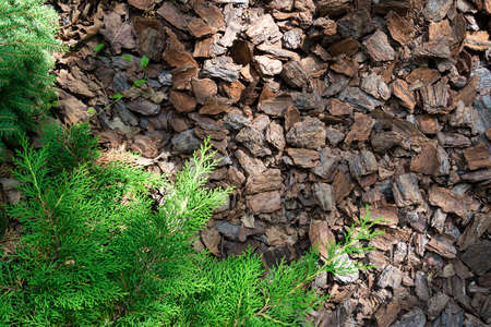 Mulching wood chips of coniferous tree bark on an alpine slide