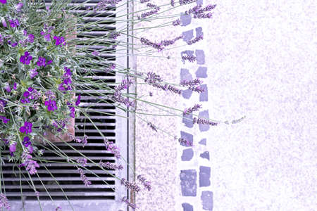 Top view of a ceramic pot with violets and lavender on the sidewalk. 写真素材