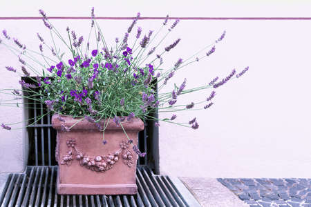 A ceramic pot with beautiful stucco with violets and lavender stands on the sidewalk 写真素材