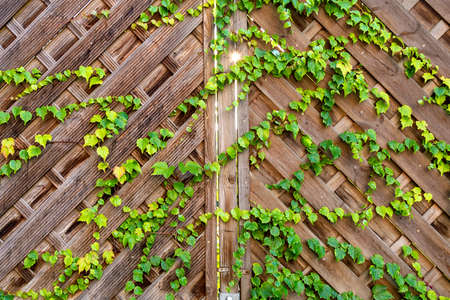 View of a wooden gate with a climbing plant through which the sun is visible Reklamní fotografie