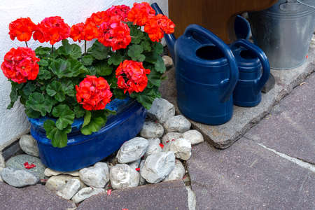 The area around the house is decorated with red geraniums in pots and watering cans
