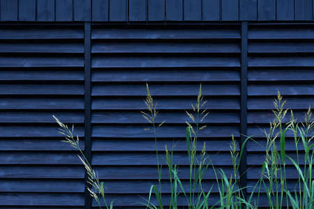 View of green tall grass against a black fence made of wooden planks arranged horizontally. Concept landscape design, garden, texture Archivio Fotografico - 138943553