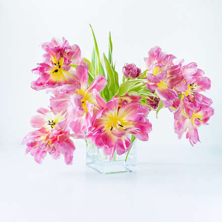 View of a glass rectangular vase with a bouquet of pink tulips on a white background. Concept background, flowers, holiday Фото со стока