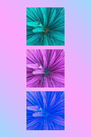 Contemporary collage. Geometric composition with palm trees in bright neon colors on pink water. Summer concept, abstraction.