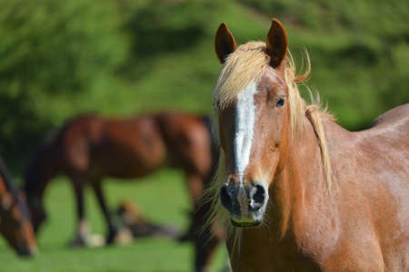 light brown horse: Wonderful close-up photo of light brown horse with another horse in the background