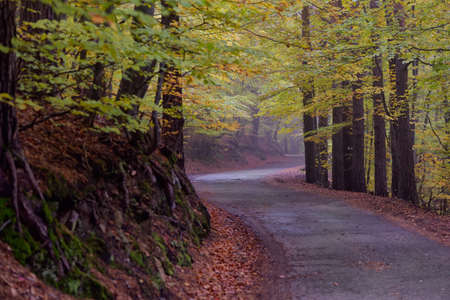 Mountain forest curving road under colorful leaves of autumn Stock Photo