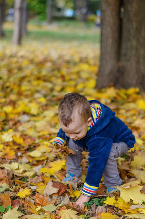 Little kid boy picking up autumn leaves in colorful clothing. Having fun in autumn park on warm day