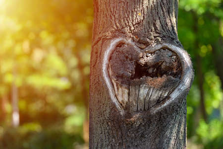 Natural heart shape in old rough wood crack tree texture against green vegetation
