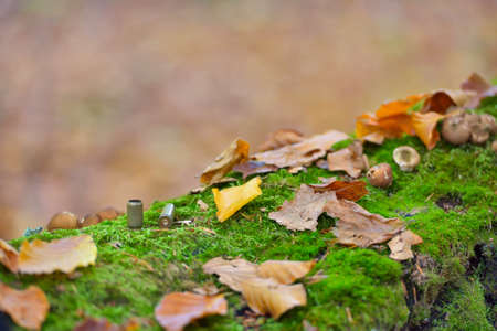 Bullet casings strewn on forest floor close up, autumn colors Stock Photo