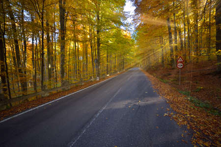 Splendid image in the forest colored leaves, asphalt road, sunset light with sunraws