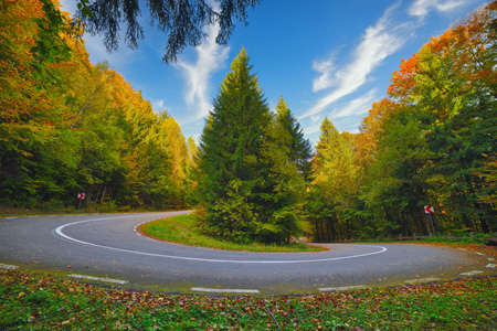 A hairpin in a mountain road in autumn colored forest at sunrise