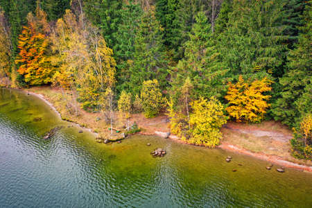 Coastline view from the drone, autumn colors forest on the coast