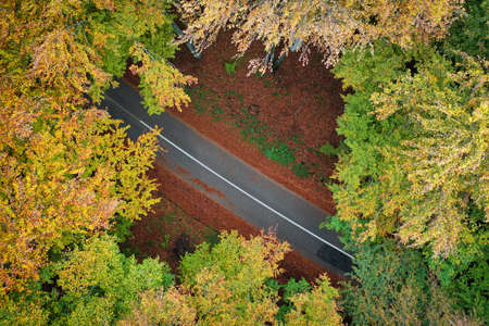 High angle view of a road trough the forest at the sunset Imagens