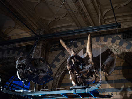Dinosaur Skulls, Tyranosaurus and Triceratop, hanged from the ceiling as exhibition in Natural History Museum, London. Shot on 13feb2019. Editorial