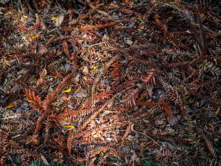 Various kinds of dried bunch leaves, turning orange, totally covering the ground.
