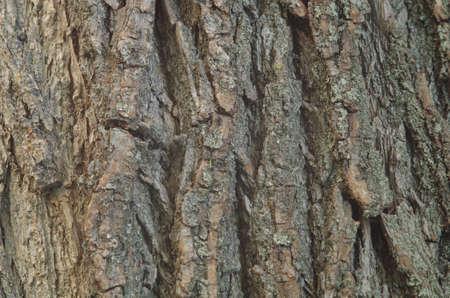 crack willow: willow bark