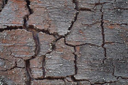 bast: birch bark bast closeup
