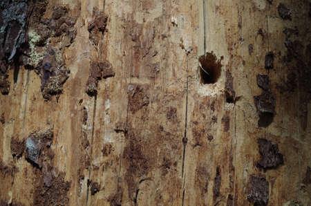 surface closeup: dead wood surface closeup