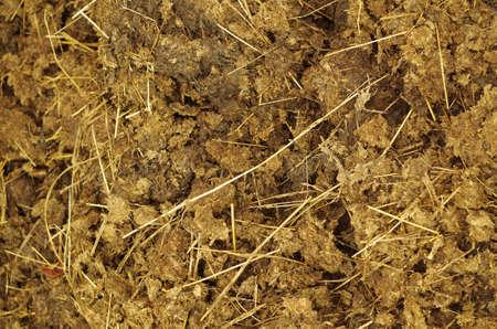 dung: Dung close up