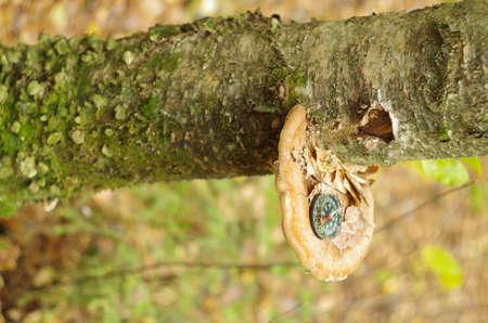 hint: compass on wood mushroom