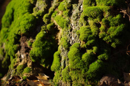 moss on the tree close-up