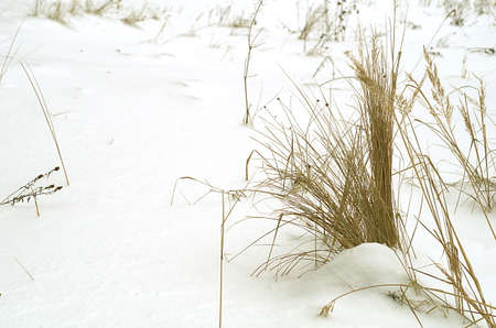 Authentic dry grass in winter on the white background