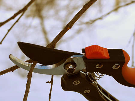 Pruning of fruit trees with a hand-operated pruner