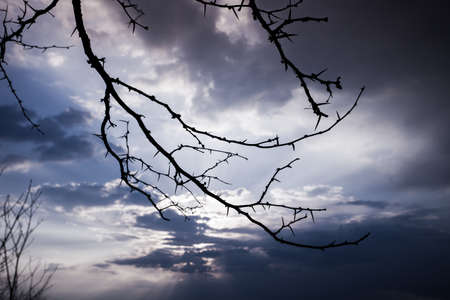 trees with thorns: silhouette of branches with thorns against sky at sunset