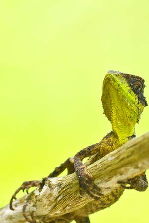 prin: lagartija espinosa verde que se sienta en el �rbol