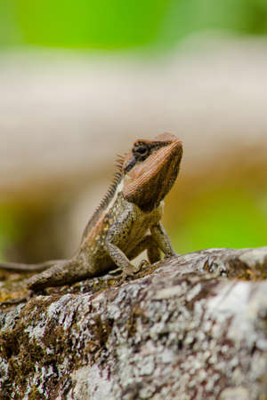 prin: lagarto espinoso naranja solo sentado en el �rbol