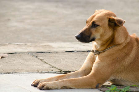 frendly: dog have coolar ,is sitting on the floor and wait a boss Stock Photo