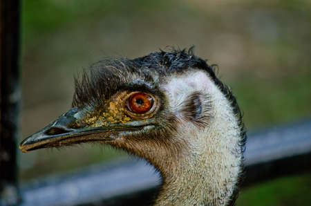 inquiring: eye ostrich is looking something and it have very big eyes