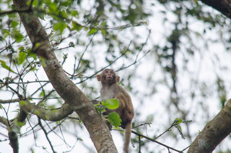 mammalia: monkey is primates in mammalia ,mostly it catch branch on the tree in dry deciduous forest
