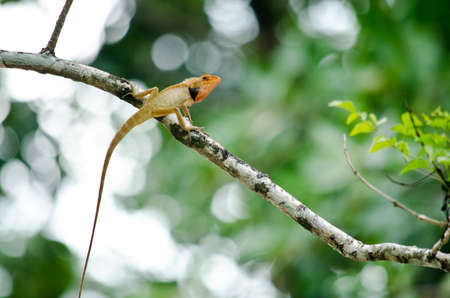 lizzard: green lizzard is sleeping on the tree Stock Photo