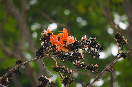 erythrina: green leaf background in forest , have many species flora . background have many  colour in frame