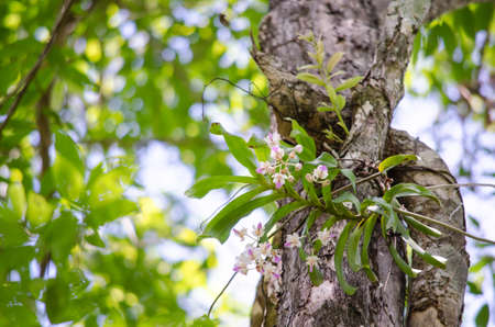 The Orchidaceae are a diverse and widespread family of flowering plants, with blooms that are often colourful .