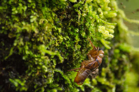 textured wall: moss is flora and growth on the tree in deep forest . it has water o spore