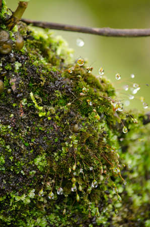 moss is flora and growth on the tree in deep forest . it has water o spore