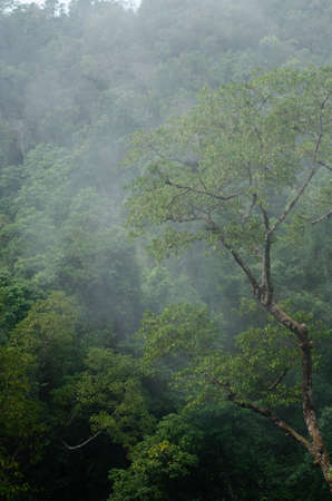 landscape nature have green plant and tree at rain forest mountain .its good place for outdoor travel on vacation or holidays in thailand. Standard-Bild