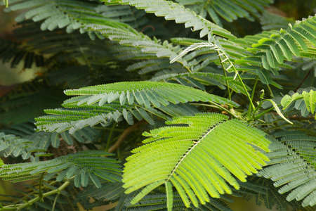 green leaf background in forest , have many species flora . background have many  colour in frame