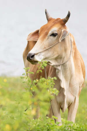 cow is on the grassland and  it is a bee in food industry