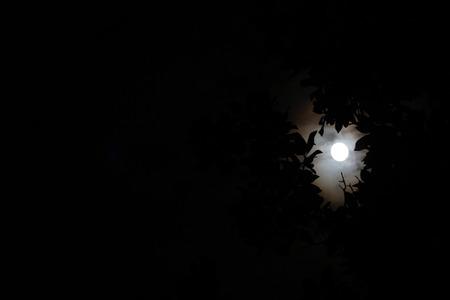 Foggy Moon Banco de Imagens