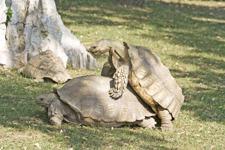 Tortoise Stock Photo - 4124253