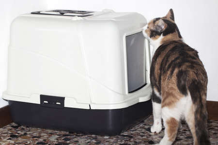 out of the box: Cat litter